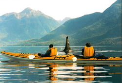 Sea kayaking vacations in Johnstone Strait, British Columbia
