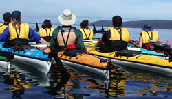 Sea kayaking adventures in Johnstone Strait, British Columbia